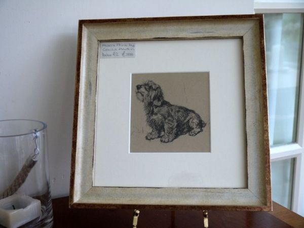 Wire Haired Dachs sitting looking up - Dax A2 -  1930's print by Cecil Aldin